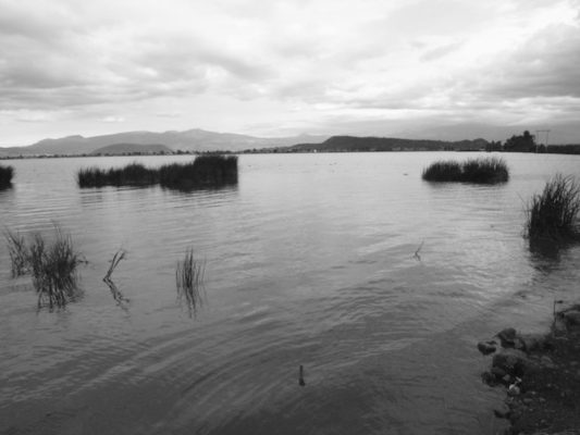 The return of a Lake- The Tlahuac-Xico Lake by Maria Thereza Alves