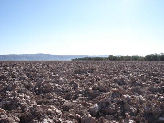 Pampa del Tamarugal en el desierto de Tarapacá. Foto de Rodolfo Andaur