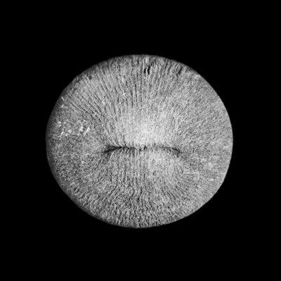 FU_Fossils.jpg