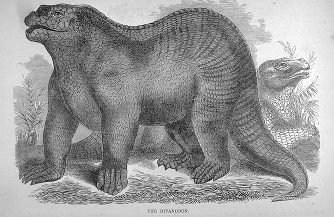 b) Representación del Iguanadonte